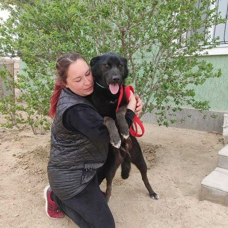 Черный пес ищет хороших  людей и дом