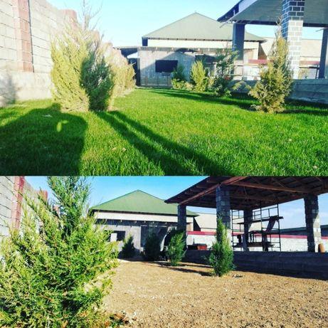 Автополив  газон