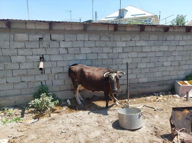 Продам корову район залиния