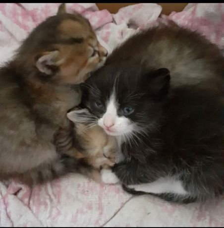 Дарю красивых котят.