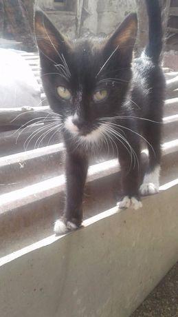 дарю котёнка в добрые руки