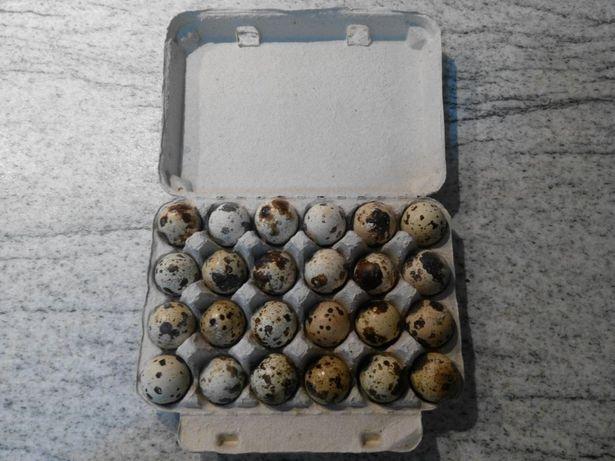 Oua de prepelita pentru consum