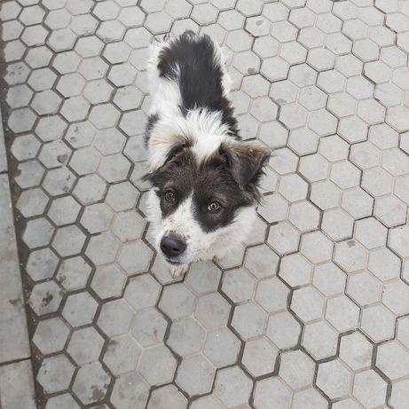 Щенок собака щеночек друг мальчик ищет дом
