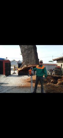 Професионално рязане на опасни дървета , поддръжка и оформяне