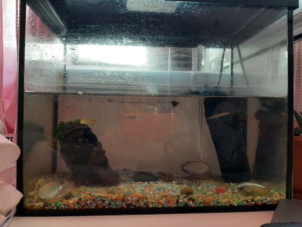 Продам аквариум 10л с 1рыбкой