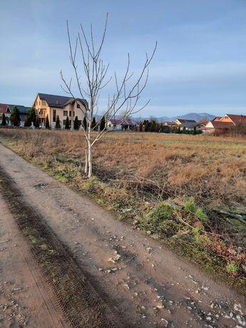 Locuri de case Negresti Oas str Ion Creanga (alea stejarului)