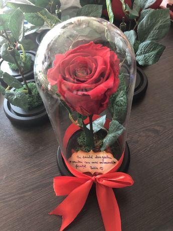 Cupola cu trandafir criogenat si mesaj personalizat