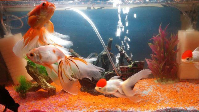 Vand acvariu pt  pești 60 litri
