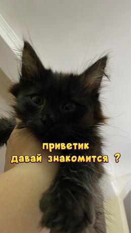 Котенок от крысоловки