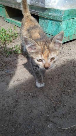 Котята хищницы   Мурки  .