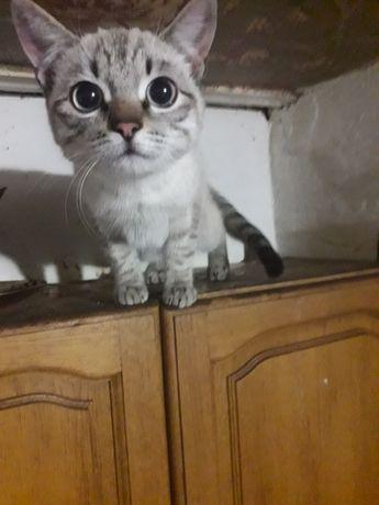 Котик подросток
