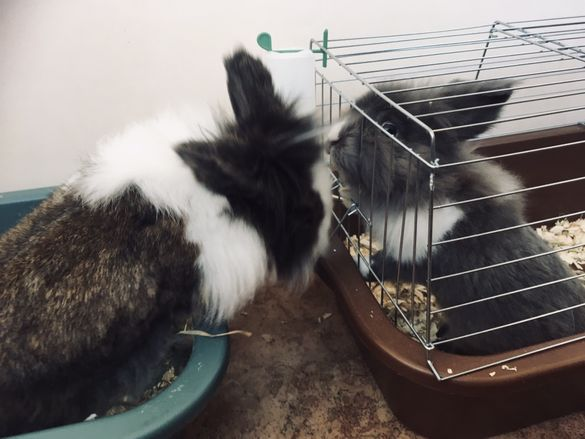 Хотел за зайци в домашни условия