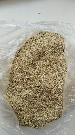 Продается семена житняка