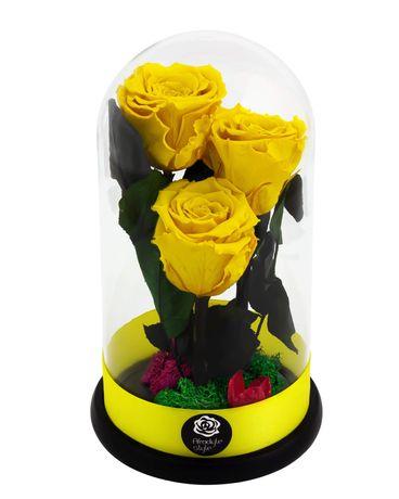 Livrare gratuita Cupolă 25 cm 3 trandafiri criogenati