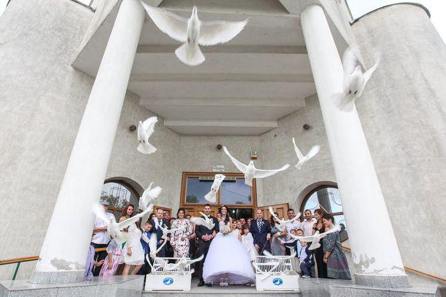 Lansari PORUMBEI ALBI la nunti Satu Mare