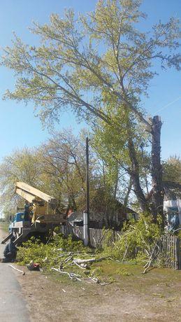 Автовышка, спилим кронируем деревья, тополь,береза, профессиональн