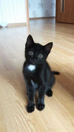 Сладкая девочка, котенок 2 месяца, кошка/кот
