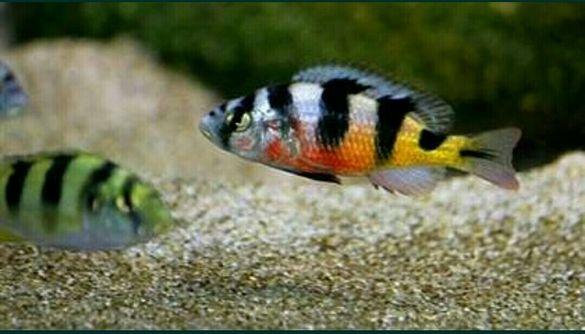 Продавам малки рибки