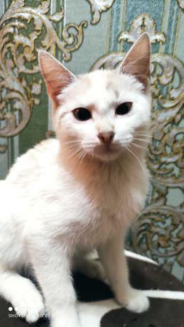 Белый котенок в добрые руки.