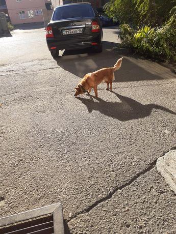 Кто потерял собачку???