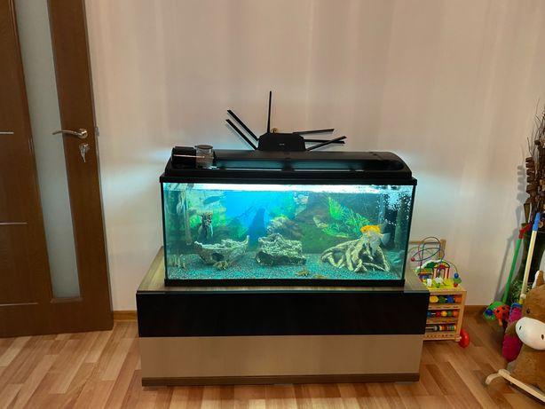 Acvariu cu Pești echipat complet