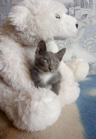 Отдам котенка девочку с доставкой