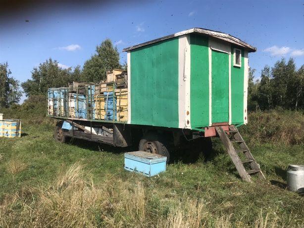 Продам пчеловодческую пасику