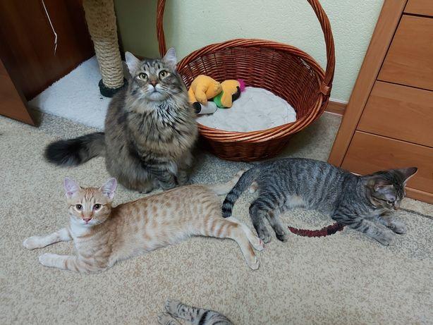 Котята котики 5 мес