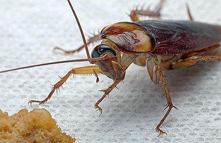 Уничтожения клопов и таракан, гарантия 100%