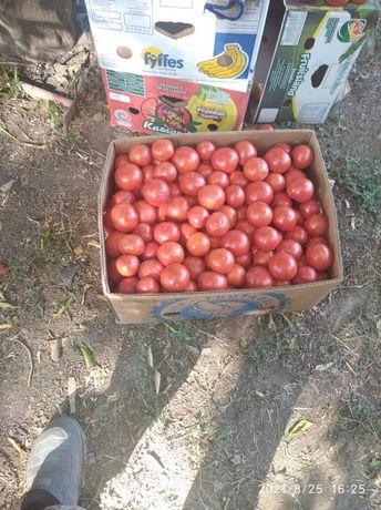 Продаю помидоры круглый красный