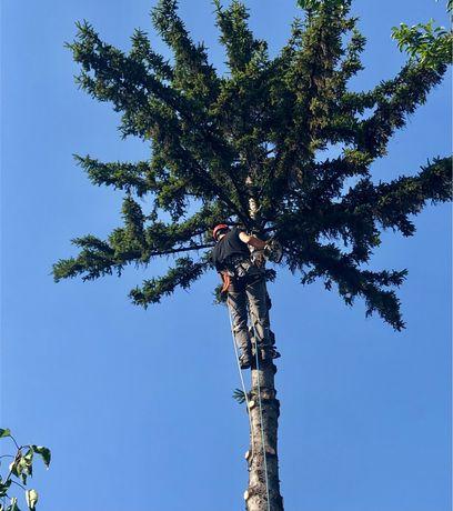 Рязане на опасни дървета