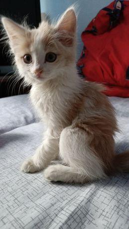 Отдам котенка девочку в добрые руки