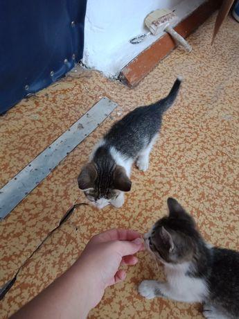 отдам 2-х котят мальчиов