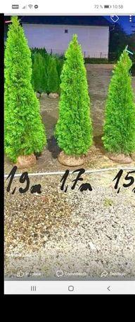 Amenajez șpați verzi cu rulou de gazon și plante ornamentale