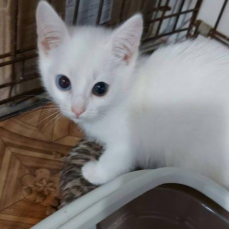 Котёнок девочка Ариша