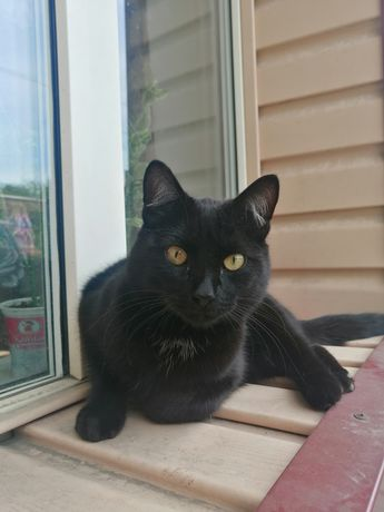 Нашёлся кот, видно домашний