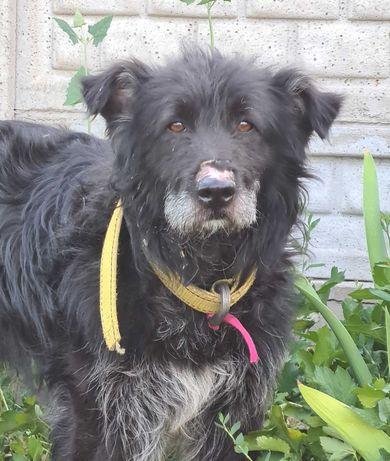 Найдена собака - Бесагаш