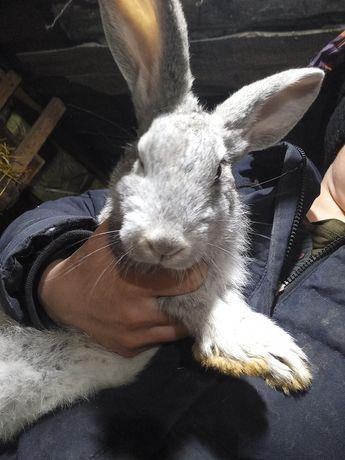 Продам кроликов маленькие 2,3,4 месяца