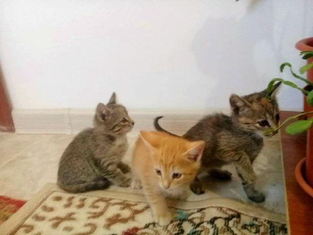 Отдам даром мысықтар/ котёнки
