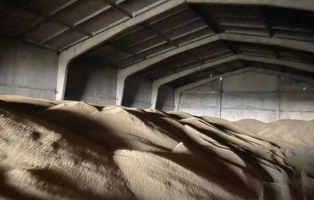 Ячмень пшеница зерно 2021 года