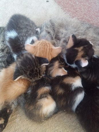 Отдам даром милых котят