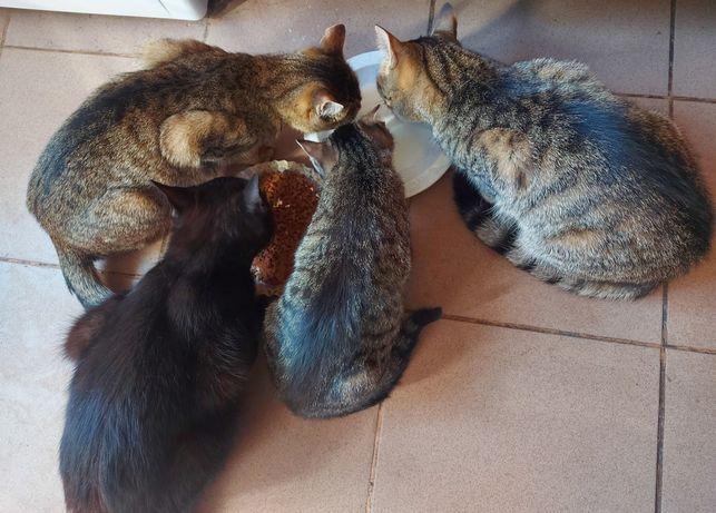 Ofer pisici spre adopție