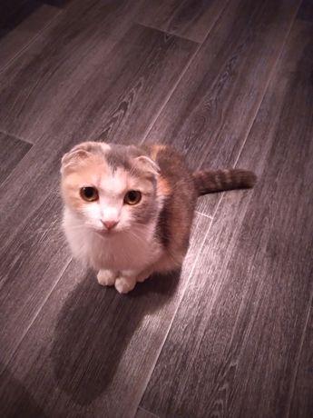 Приют для всех кошек и котят