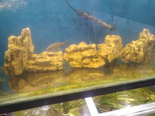 натуралныи морскои камень