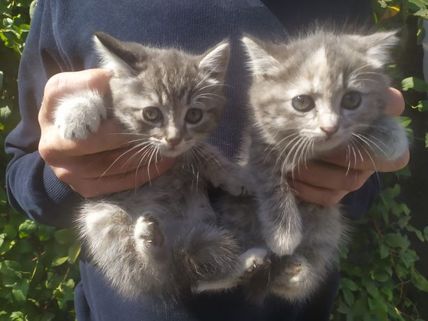 Отдам котят в заботливые руки:)