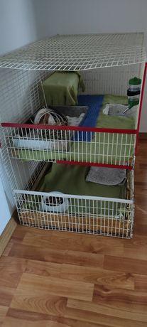 Cușcă porcușori de guineea, iepuri