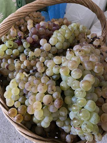 Vand struguri pt vin - zona Calina/Dragasani