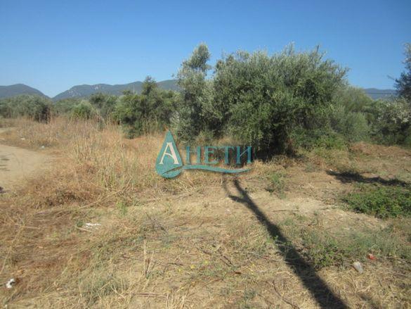 УПИ 1650 м2 с маслинови дървета в курортно селище Неа Врасна, до плажа