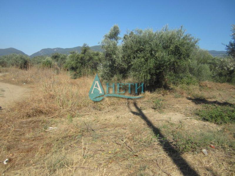 УПИ 1650 м2 с маслинови дървета в курортно селище Неа Врасна, до плажа гр. София - image 1