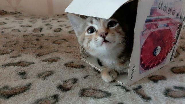 Отдам в добрые руки ласковых игривых котят